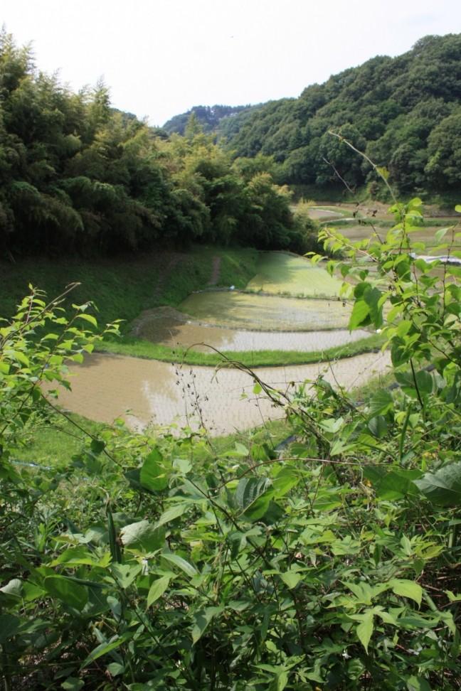IMG_9294棚田